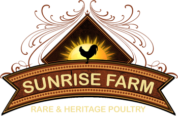 Chick Coops Texas by Sunrise Farm